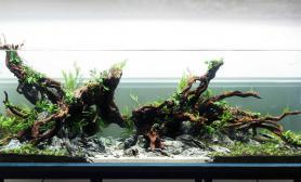 水草缸造景沉木水草泥化妆砂青龙石150CM及以上尺寸设计57