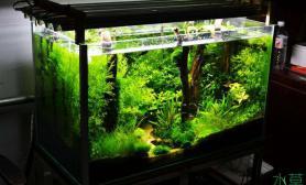 树林缸俩月了鱼缸水族箱小清新鱼缸水族箱