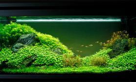 沉木青龙石水草造景120CM尺寸设计50