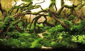 水草造景美图收藏(一)水草缸总有你喜欢的