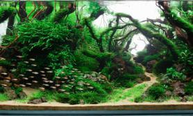 水草缸造景沉木水草泥化妆砂青龙石150CM及以上尺寸设计54