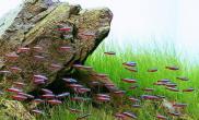 如何和谐鱼与水草的结合(图)