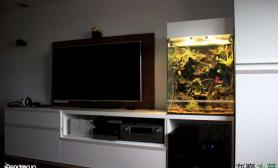 电视机旁边的雨林缸