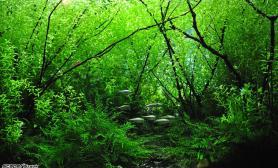 小缸大景森林漫步水草缸