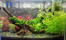 1个半月水草缸长势良好鱼缸水族箱