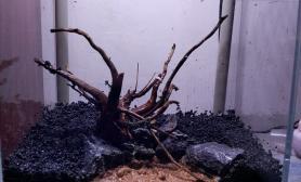 小缸重回沉木景