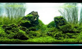 水草缸造景沉木水草泥化妆砂青龙石120CM尺寸设计34