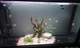 我的鱼缸2个多月了