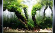 沉木青龙石水草造景45CM及以下尺寸设计29
