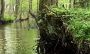 海量树林景森林景实景图片造景素材2