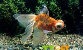 导致鱼卵发霉的原因