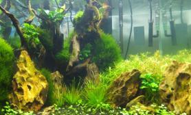 《无CO2水草造景实况》