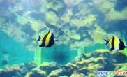鱼类寄生虫病的传播与流行(图)