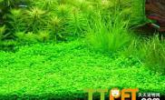 水草的叶片是如何吸收养分的