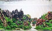 90CM松皮石造景摆石案例图文