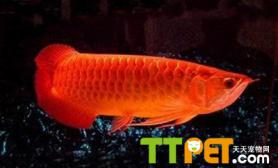 鱼类生长发育阶段大全