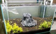 一石成景水草缸就是这么屌鱼缸水族箱鱼缸水族箱鱼缸水族箱