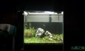 水草造景30小缸水草缸请大家拍砖鱼缸水族箱