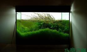 水族箱造景绿海