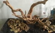 松皮石、杜鹃根骨架