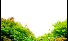 水草缸造景沉木水草泥化妆砂青龙石120CM尺寸设计08