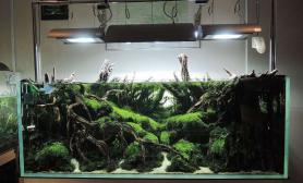 美丽造景:热带雨林区