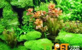 水族箱的水草冒泡需要的条件