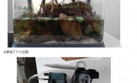 我对小小水路螃蟹缸