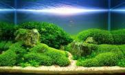 沉木青龙石水草造景60CM尺寸设计21