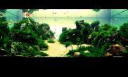 中国风 山水画式造景