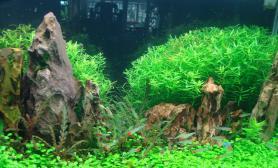 开缸一个月后的状态水草缸请点评沉木杜鹃根青龙石水草泥