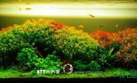 非常漂亮的一个水草缸含成景过程