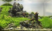 EAPLC2016水草造景大赛小缸组前十作品欣赏