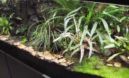 雨林水陆生态缸17