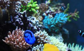 海水缸造景珊瑚活体麦田怪圈100*60*50仙骨混养