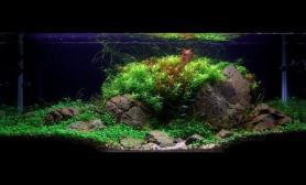 水草缸造景沉木水草泥化妆砂青龙石90CM尺寸设计56