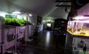 欧洲GREEN AQUA 水草造景工作室 二层阁楼一览