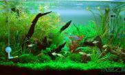 [其它]【我爱水草独一无二】悠游自在,童话世界。60CM绝美造景。