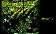 石杉石豆兰积水凤梨苹果石豆兰硃色兰精品雨林水陆生态缸假山塑形