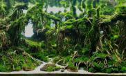 造景(120CM)原始狂野沉木杜鹃根MOSS水草造景亚马逊风格