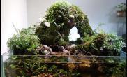 水族箱造景2013年水陆缸二等奖---生命之泉