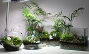 新玩法,苔藓缸