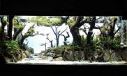 胖老外的树林造景水草缸漂亮的要命