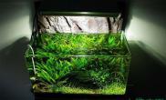 鱼缸造景30椒草迷你缸初步配置设想水草缸大家多提意见