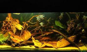 水草造景沉木原生缸—野性的释放