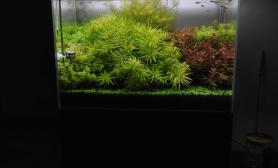 二氧化碳也没灌上鱼缸水族箱留两张照片留念年后清缸鱼缸水族箱