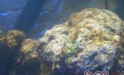 硅藻爆发的原因和处理方法