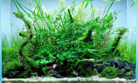 大神给看看水草缸这个景要种什么草?