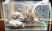 折腾水草缸无限翻缸的后果鱼缸水草造景鱼缸水草造景鱼缸水草造景水族箱图片