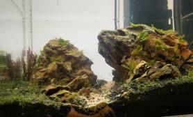 开缸一周水草缸开始长藻?